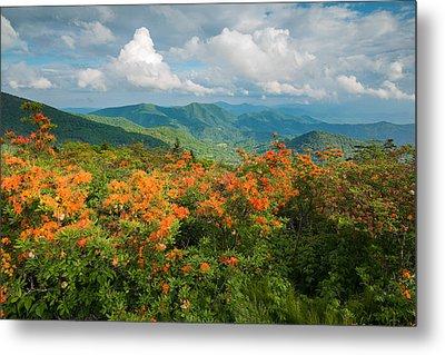 Flame Azaleas Roan Highlands Appalachian Trail Metal Print by Rick Dunnuck