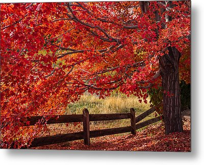Flames On The Fence Metal Print by Darren  White