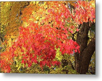 Flaming Autumn 3 Leaves Art Metal Print by Reid Callaway