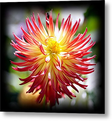 Metal Print featuring the photograph Flaming Beauty by AJ Schibig