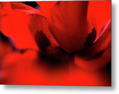 Metal Print featuring the photograph Flaming Red Poppy by Jenny Rainbow