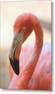 Metal Print featuring the photograph Flamingo 2 by Elizabeth Budd