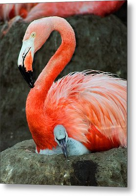 Flamingo And Baby Metal Print by Anthony Jones