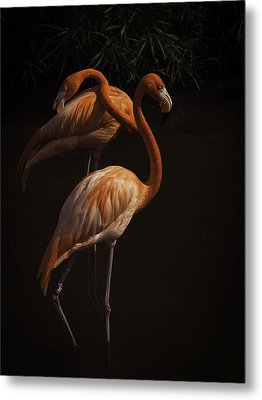 Metal Print featuring the photograph Flamingo Delight by Rob Wilson