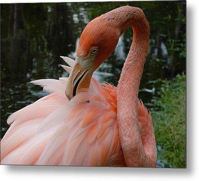 Flamingo Feathers Metal Print