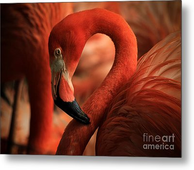 Flamingo Poised Metal Print by Toma Caul