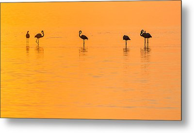 Flamingo Sunset - Silhouette Photograph Metal Print