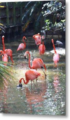 Flamingos Metal Print by Diane Merkle