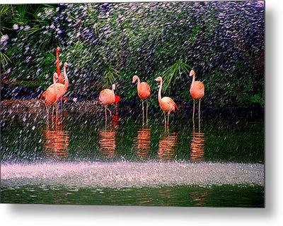 Flamingos II Metal Print by Susanne Van Hulst