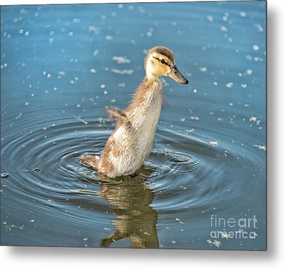 Flappy Duck Metal Print