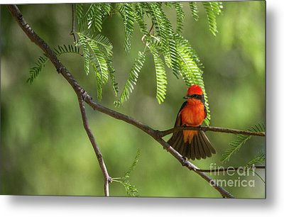 Flashy Vermillion Metal Print by Ruth Jolly