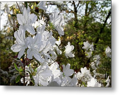 Metal Print featuring the photograph Fleeting Beauty by Chris Scroggins