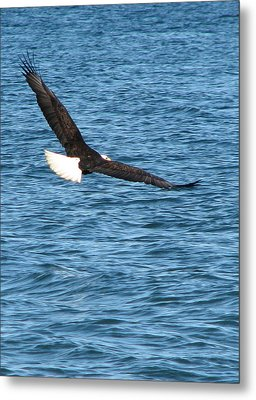 Flight Of An Eagle  Metal Print
