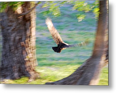 Metal Print featuring the photograph Flight Of The Heart by Teresa Blanton