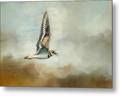 Flight Of The Killdeer Metal Print