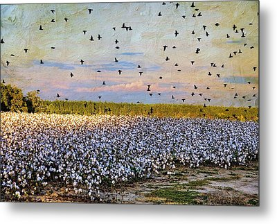 Metal Print featuring the photograph Flight Over The Cotton by Jan Amiss Photography