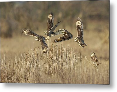 Metal Print featuring the photograph Flight Sequence by Angie Vogel