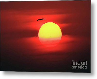Flight To The Sun Metal Print