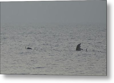 Flipper Metal Print by Bill Cannon