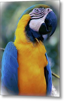 Flirtacious Macaw Metal Print by DigiArt Diaries by Vicky B Fuller