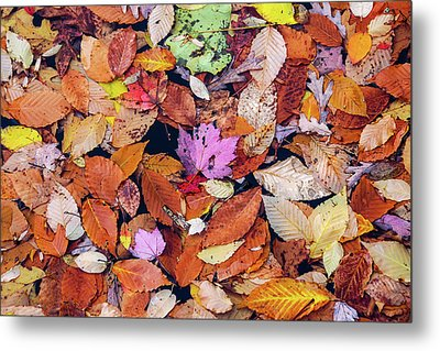 Floating Autumn Leaves On A Lake Metal Print by Morris Finkelstein