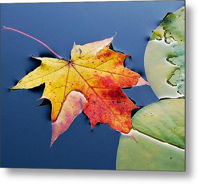 Floating Maple Leaf Metal Print by Marion McCristall