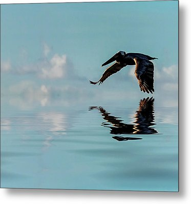 Floating On Air Metal Print by Cyndy Doty