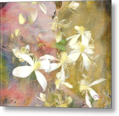 Floating Petals Metal Print by Colleen Taylor