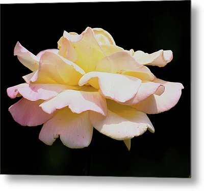 Floating Rose 3894 Metal Print