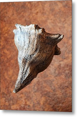 Floating Shell Metal Print by Christopher Holmes