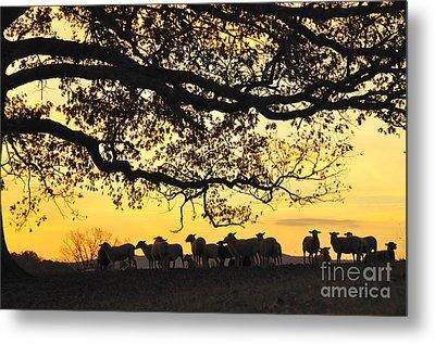 Flock At Sunrise Metal Print by Thomas R Fletcher
