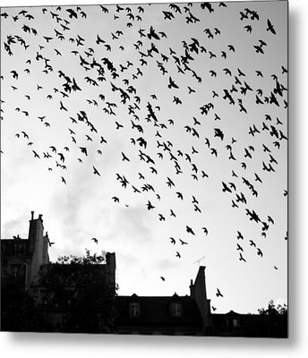 Flock Of Bird Flying Metal Print