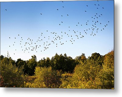 Flock Of Birds Metal Print by Christina Rollo
