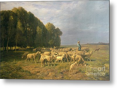 Flock Of Sheep In A Landscape Metal Print