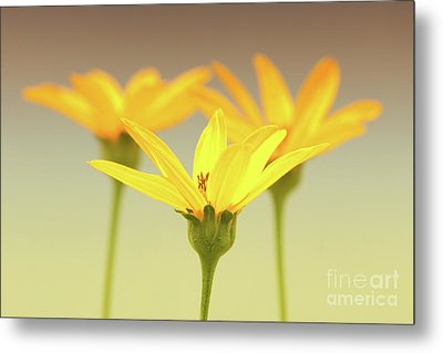 Floral Brilliance Metal Print