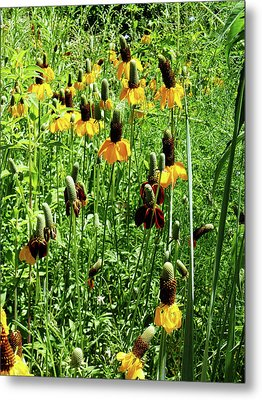 Metal Print featuring the photograph Floral by Cynthia Powell
