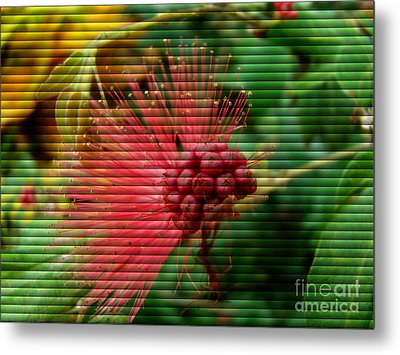 Metal Print featuring the photograph Floral Fan by Sue Melvin
