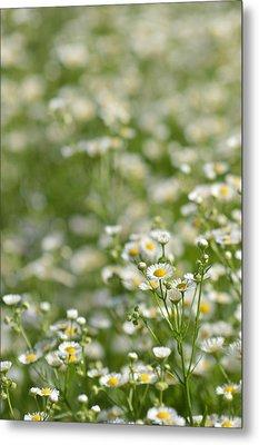 Floral Field #1 Metal Print