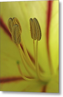 Floral Office Gossip Metal Print by Juergen Roth