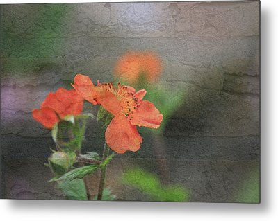 Floral Photo Of Orange Spring Flower And Texture Metal Print