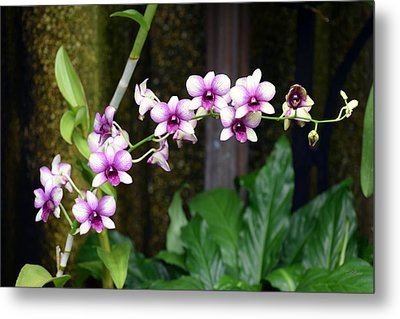 Metal Print featuring the photograph Floral Sway by Deborah  Crew-Johnson