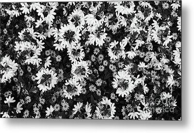 Floral Texture In Black And White Metal Print