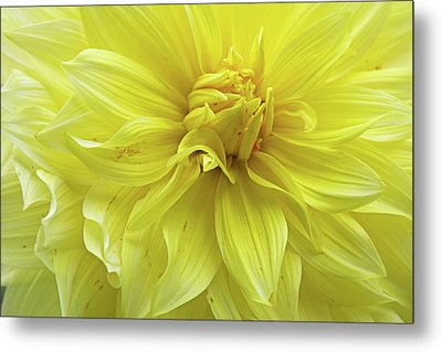 Metal Print featuring the photograph Floral Whipped Cream by Juergen Roth