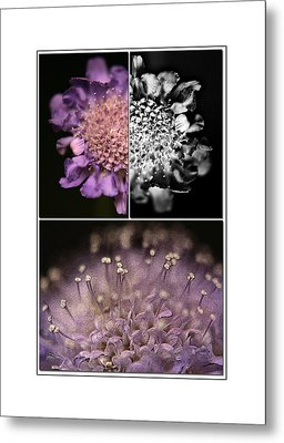 Floralicious  Metal Print