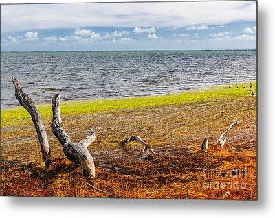Florida Keys Colors Metal Print by Elena Elisseeva