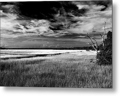 Florida Marsh Metal Print by Marcus Adkins