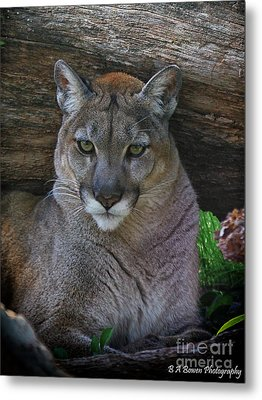 Florida Panther Metal Print by Barbara Bowen