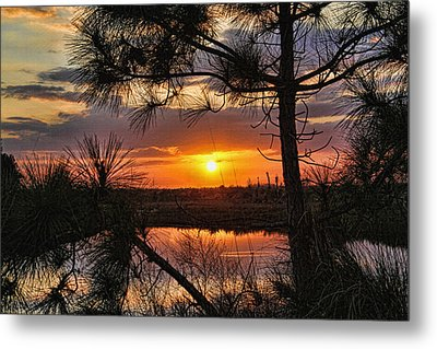Florida Pine Sunset Metal Print by HH Photography of Florida