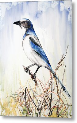 Florida Scrub Jay Metal Print by Anthony Burks Sr
