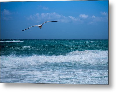 Metal Print featuring the photograph Florida Seagull In Flight by Jason Moynihan